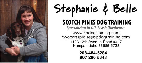 Scotch Pines Dog Training Boise